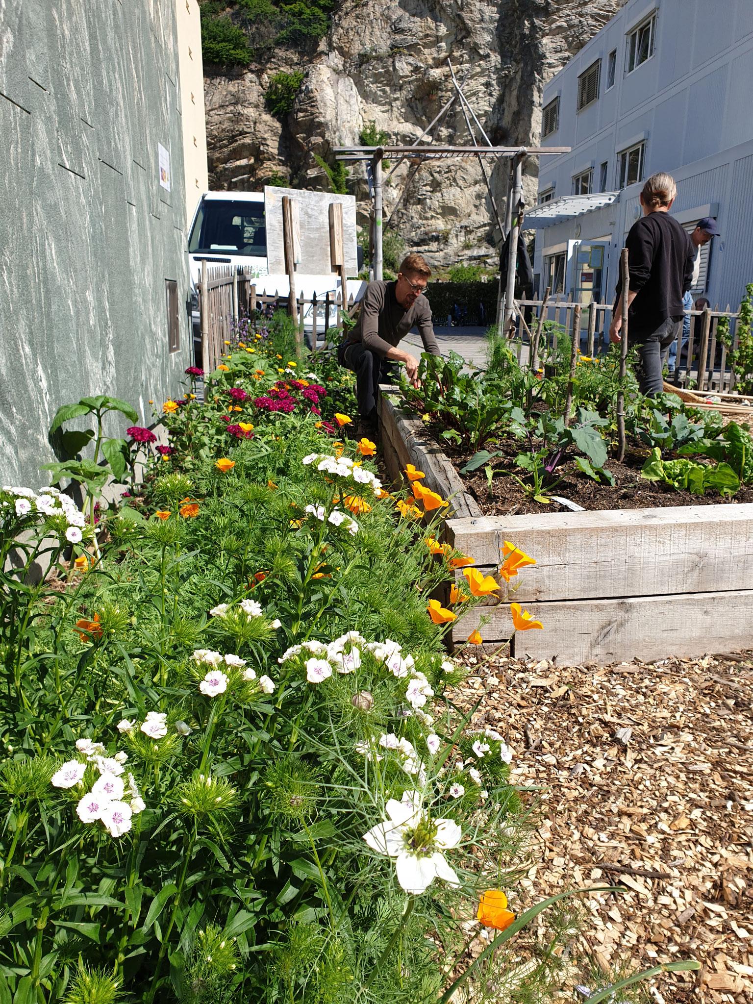 Pour le plaisir des yeux, venez admirer le jardin du Scex qui offre un spectacle coloré.