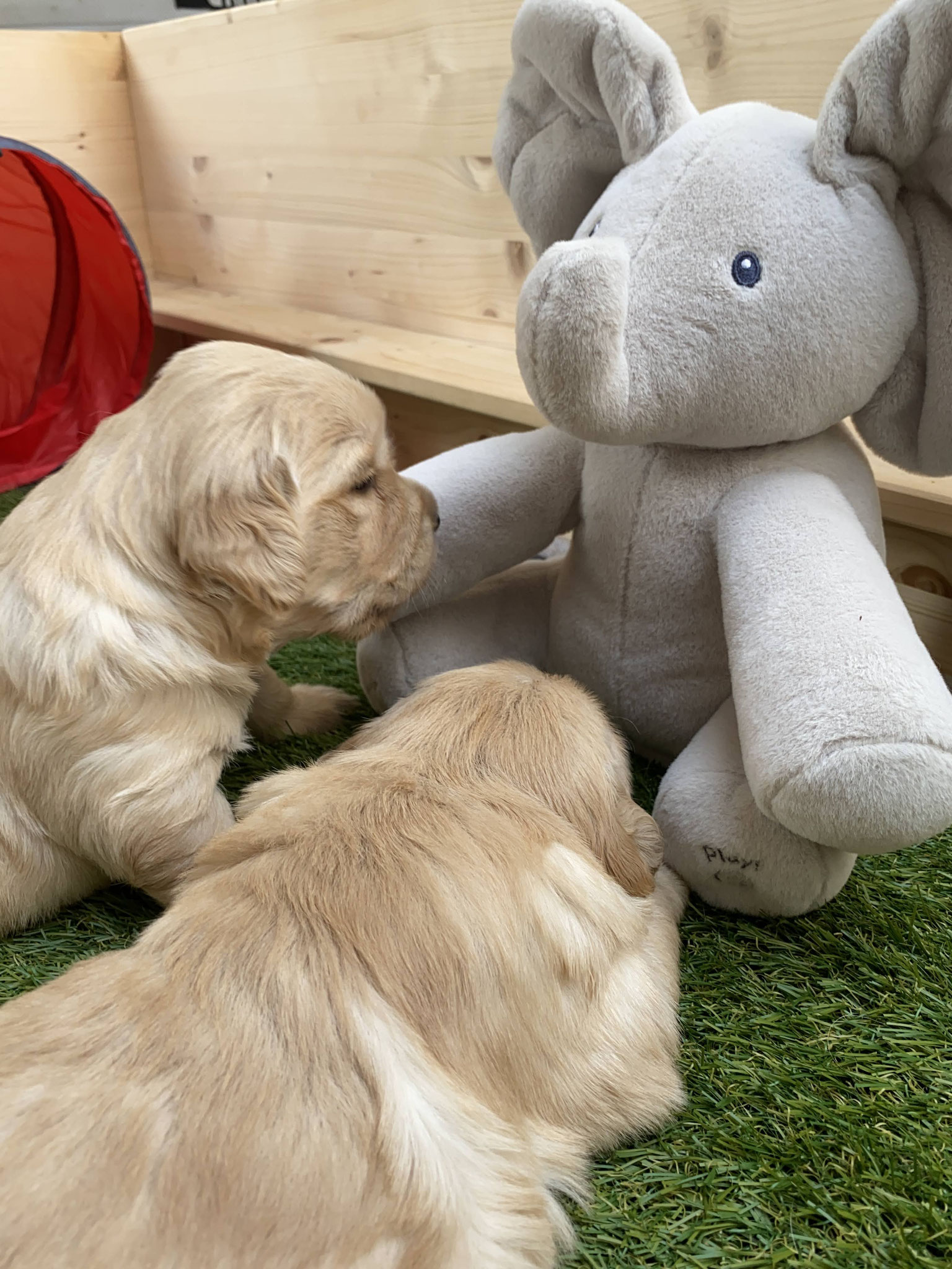 Die Prinzessinnen lernen Stimmungskanone Ella the Elephant kennen 🐘