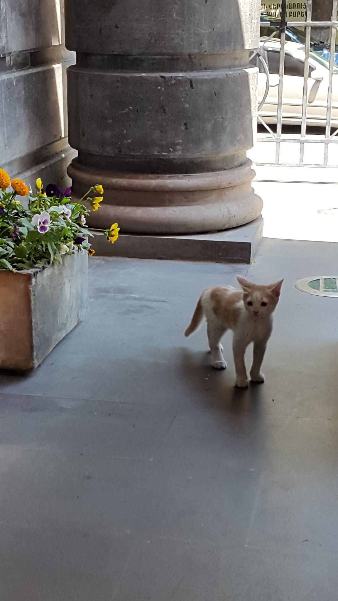 Katze auf der Terasse des Tufenkian Hotels