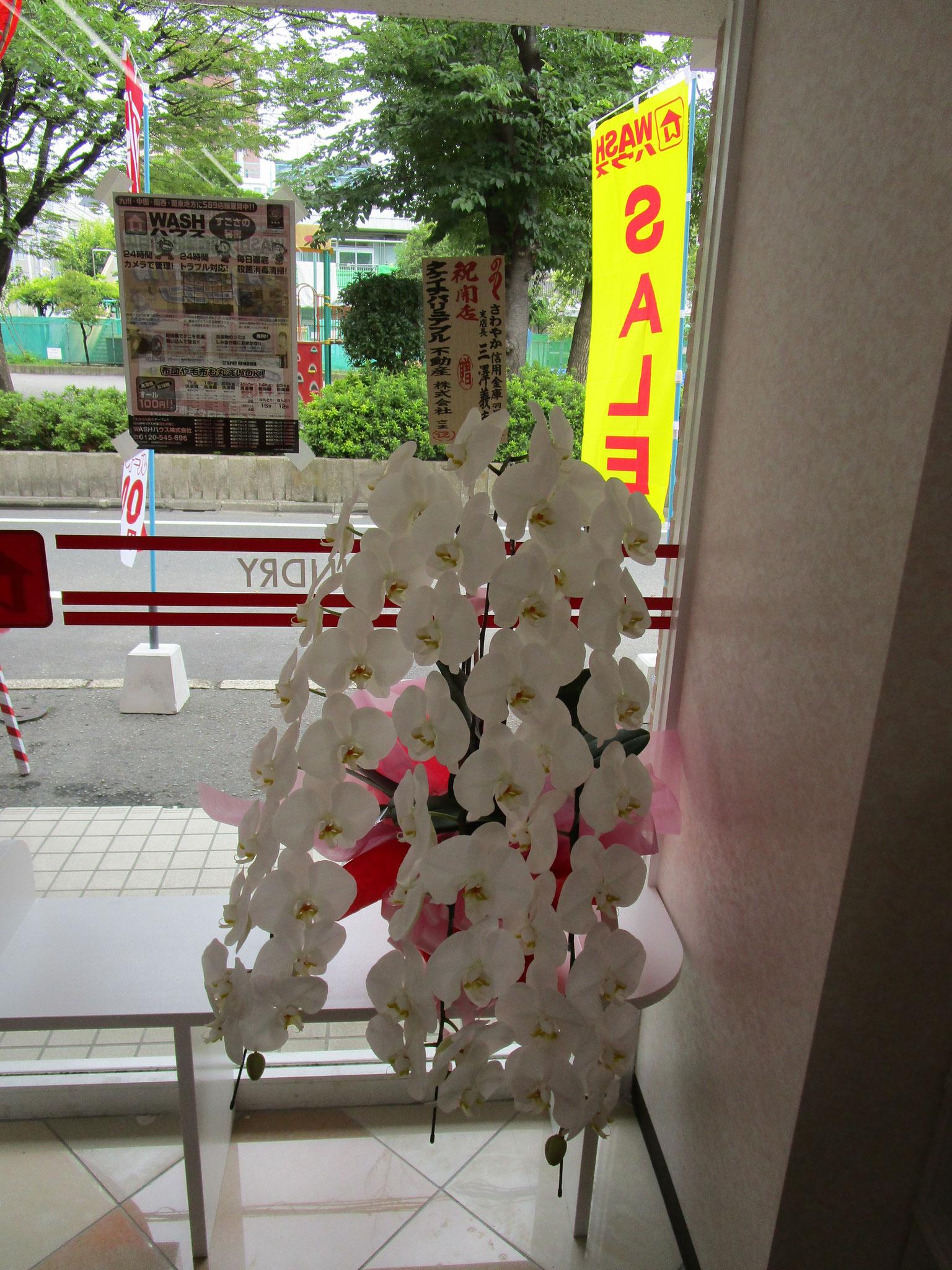 さわやか信用金庫さんからも胡蝶蘭をいただきました