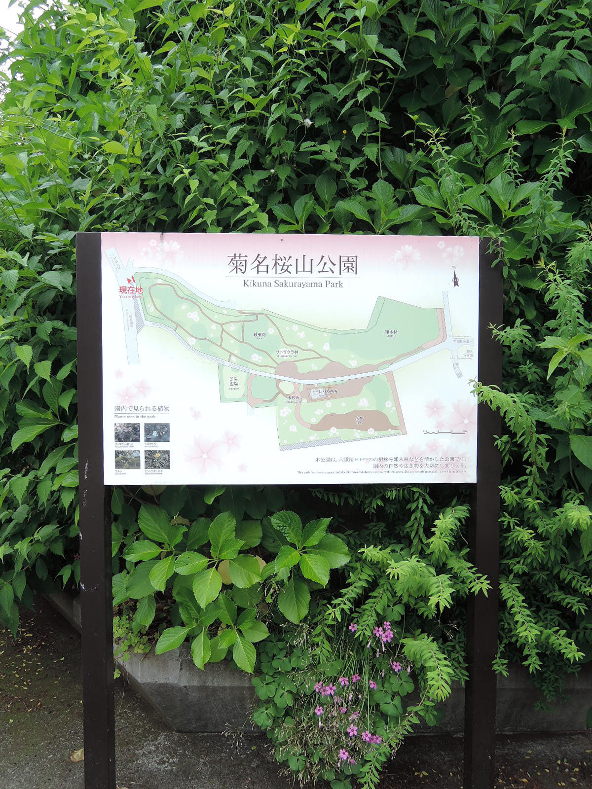 お部屋のバルコニーから間近に見える菊名桜山公園