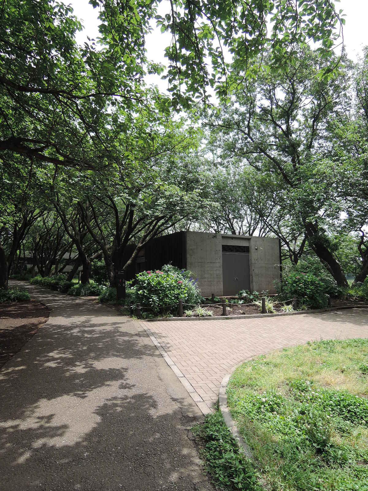 緑豊かな公園です