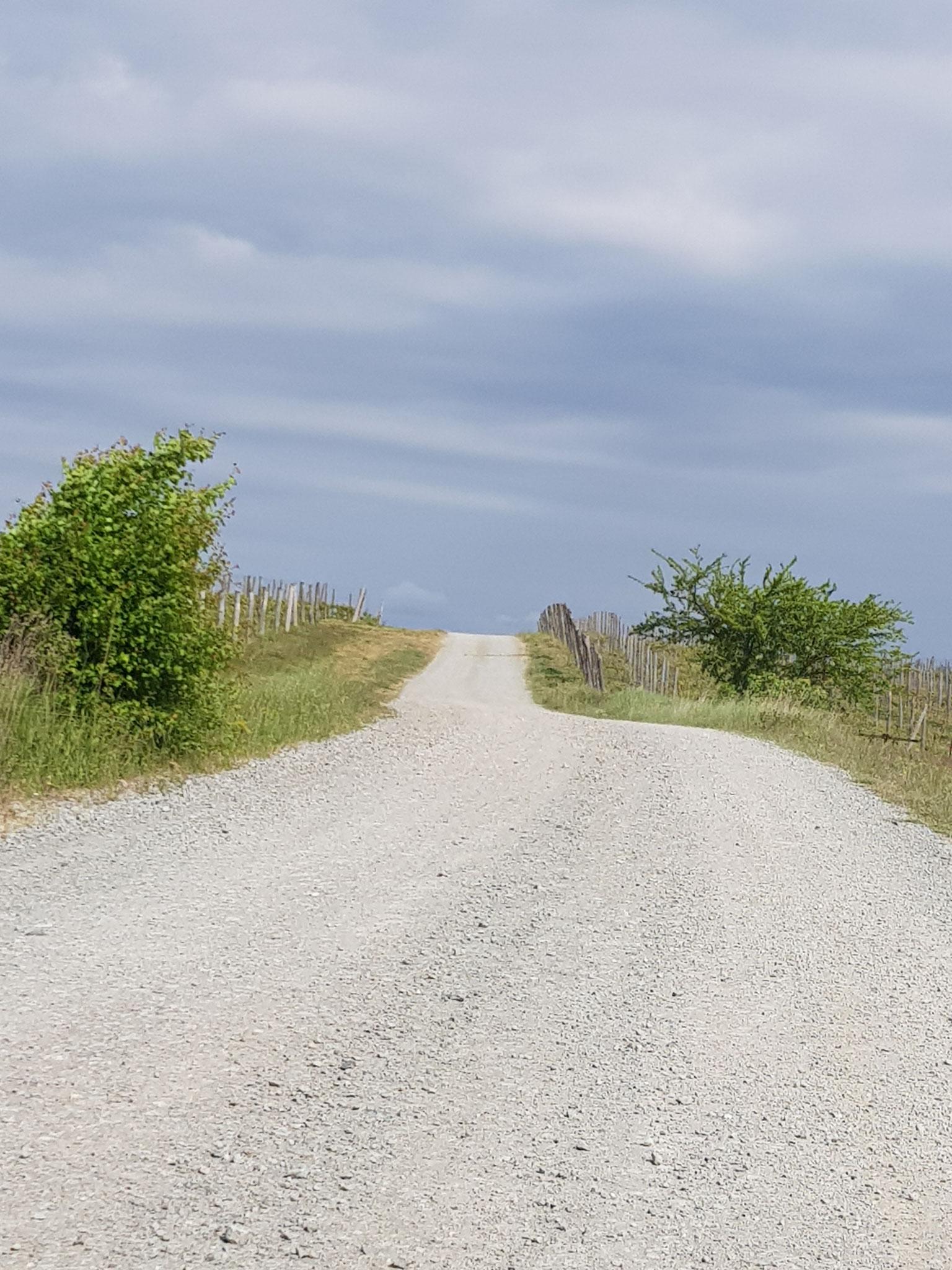 Stundenlang kann man über die piemontesischen Hügel wandern.