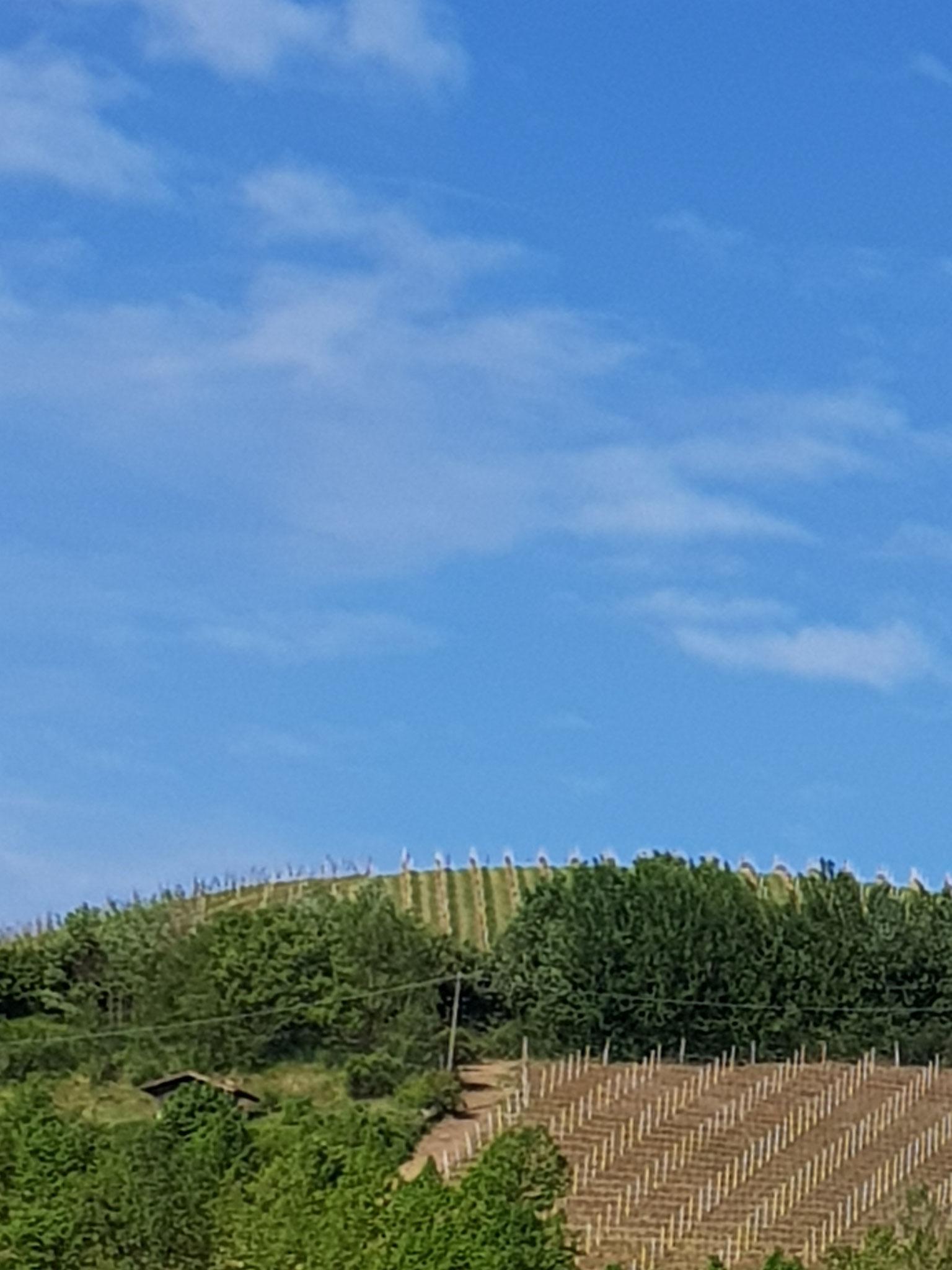 Auf diesem Hügel wächst ein feiner Tropfen.
