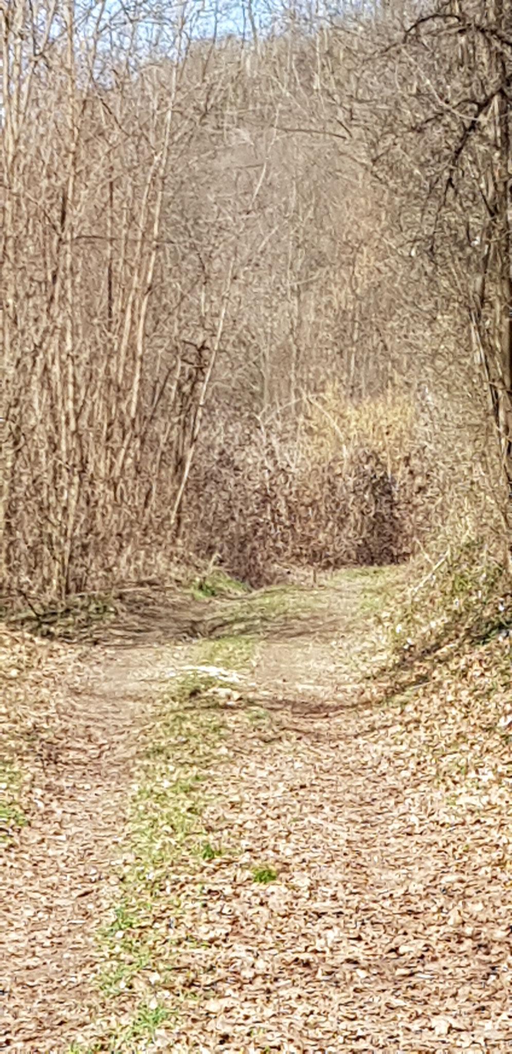 """Im Sommer scheint dieser Weg im """"Tal des Todes"""" sicher wie verwunschen."""