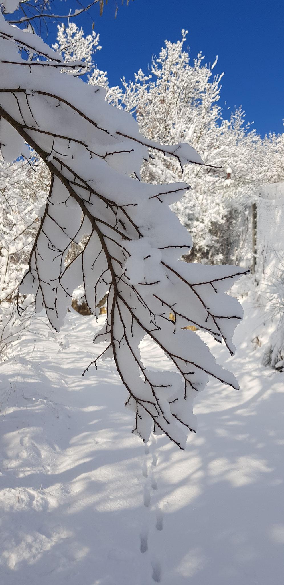 Schneezauber 1