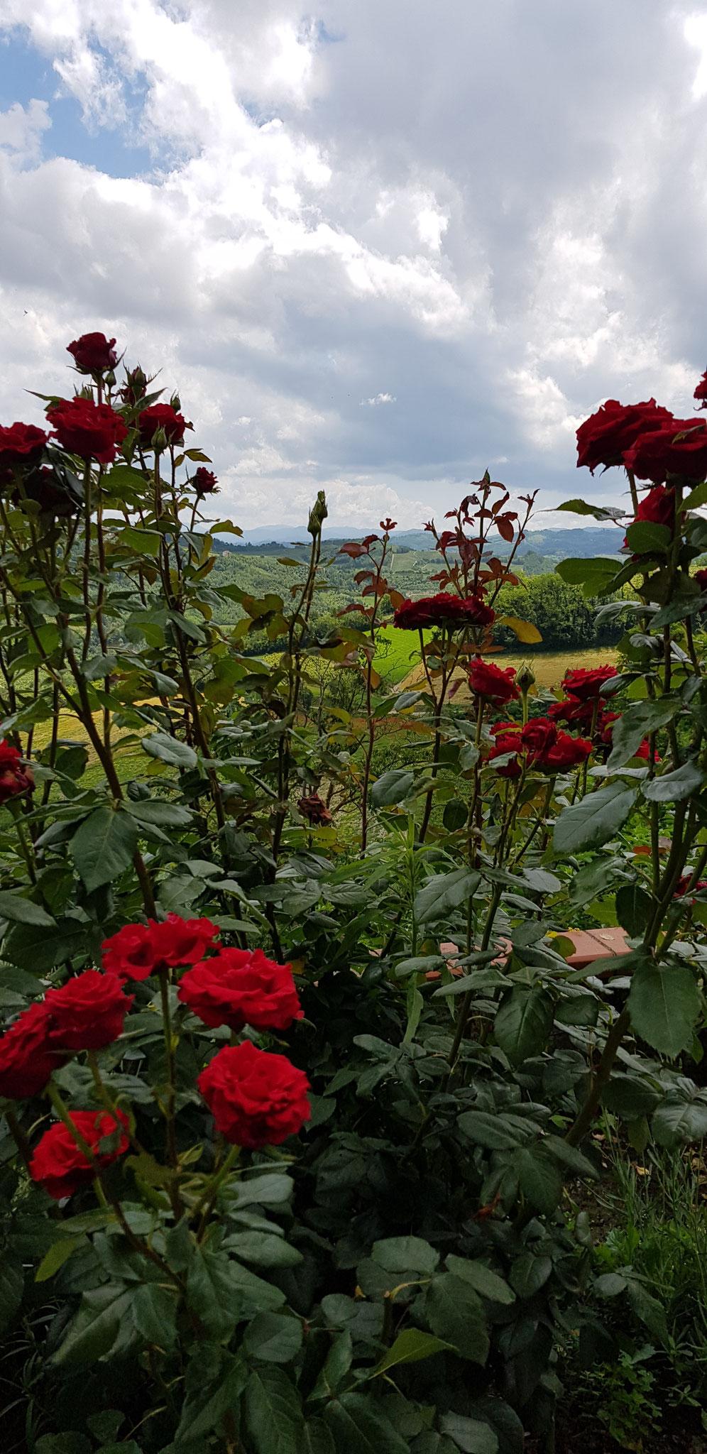 . . . und Rosen