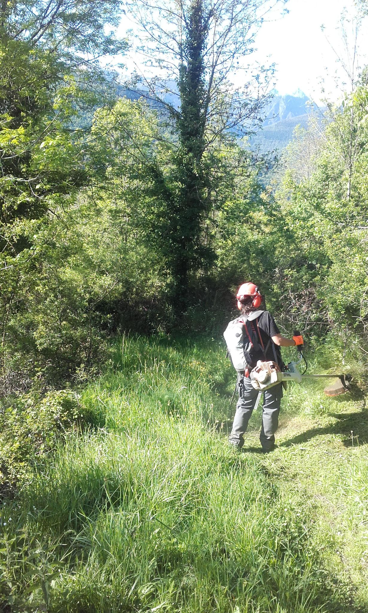 Débroussaillage de chemins communaux et sentiers de randonnée