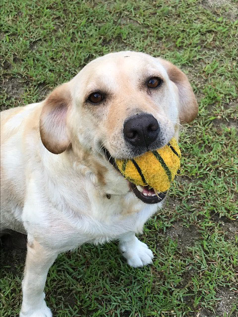 ママのJJちゃん ボール投げ何回でも行くよ!