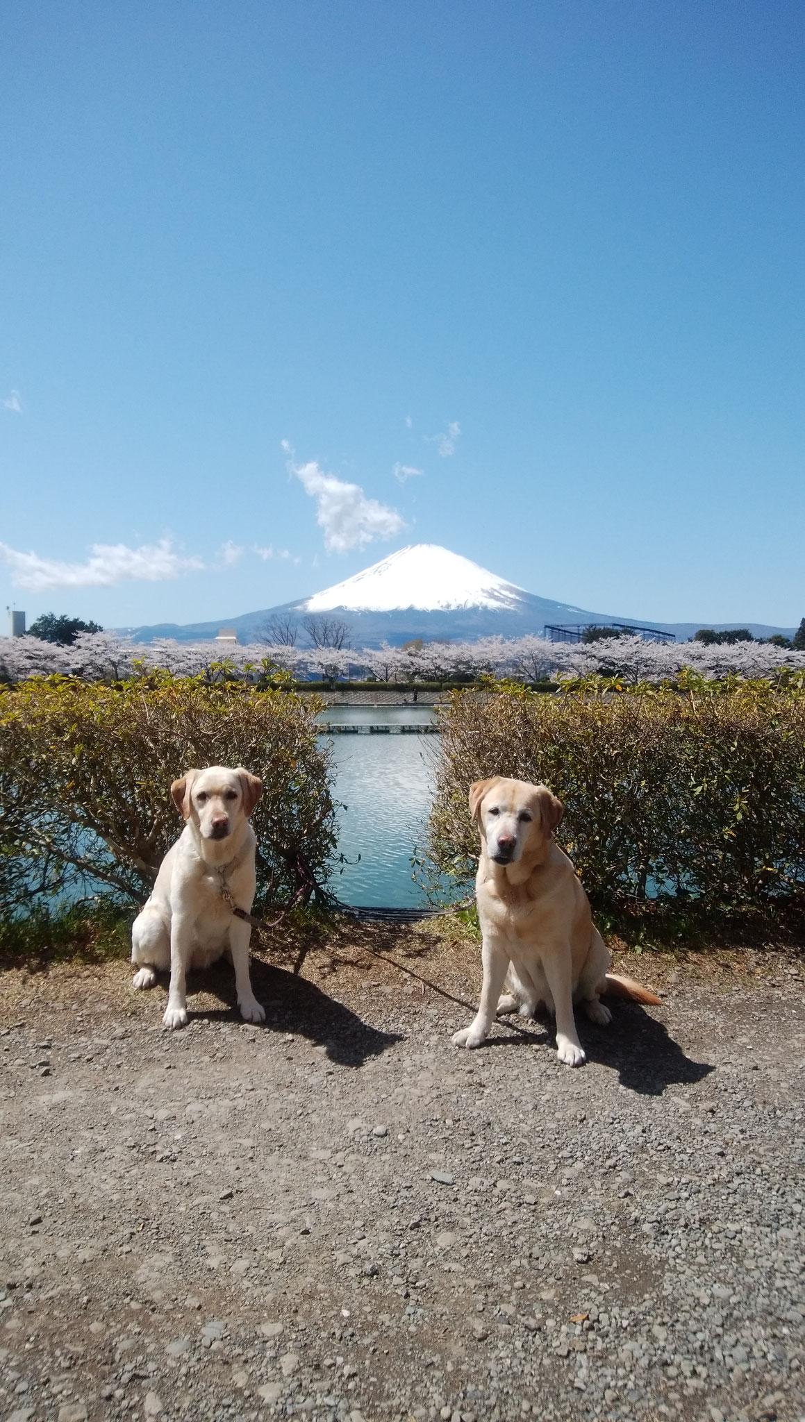時々箱根に行くよ! ソフィーちゃんとアーニャちゃん