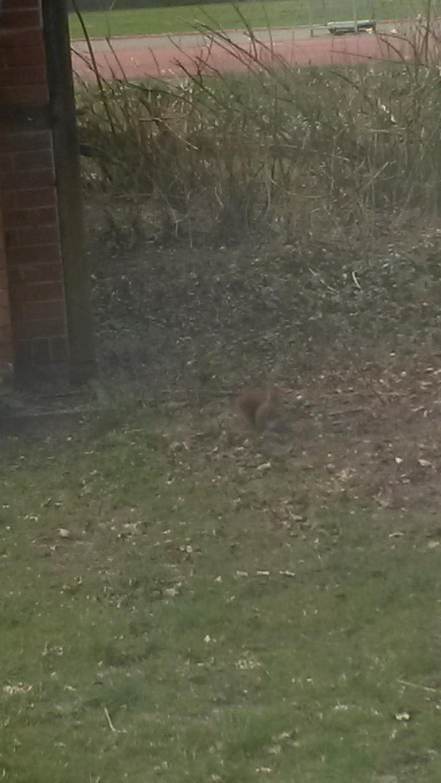 ein Eichhörnchen findet die verborgenen Leckereien