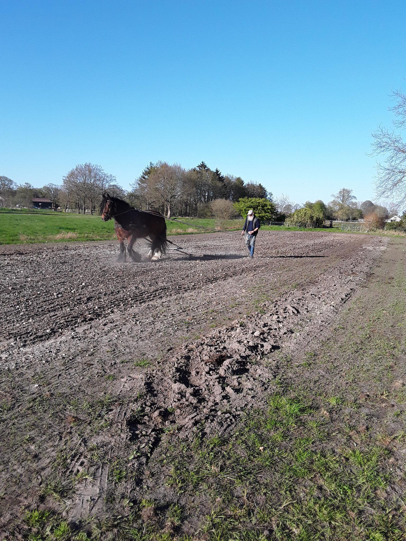 Hans Bruns bei der Arbeit mit seinem Pferd Artur