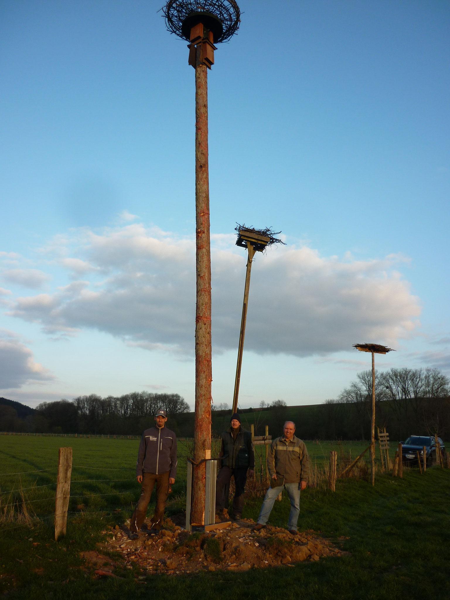 Der 9 Meter hohe Mast steht und das Nest wartet auf ein neues Storchenpaar.