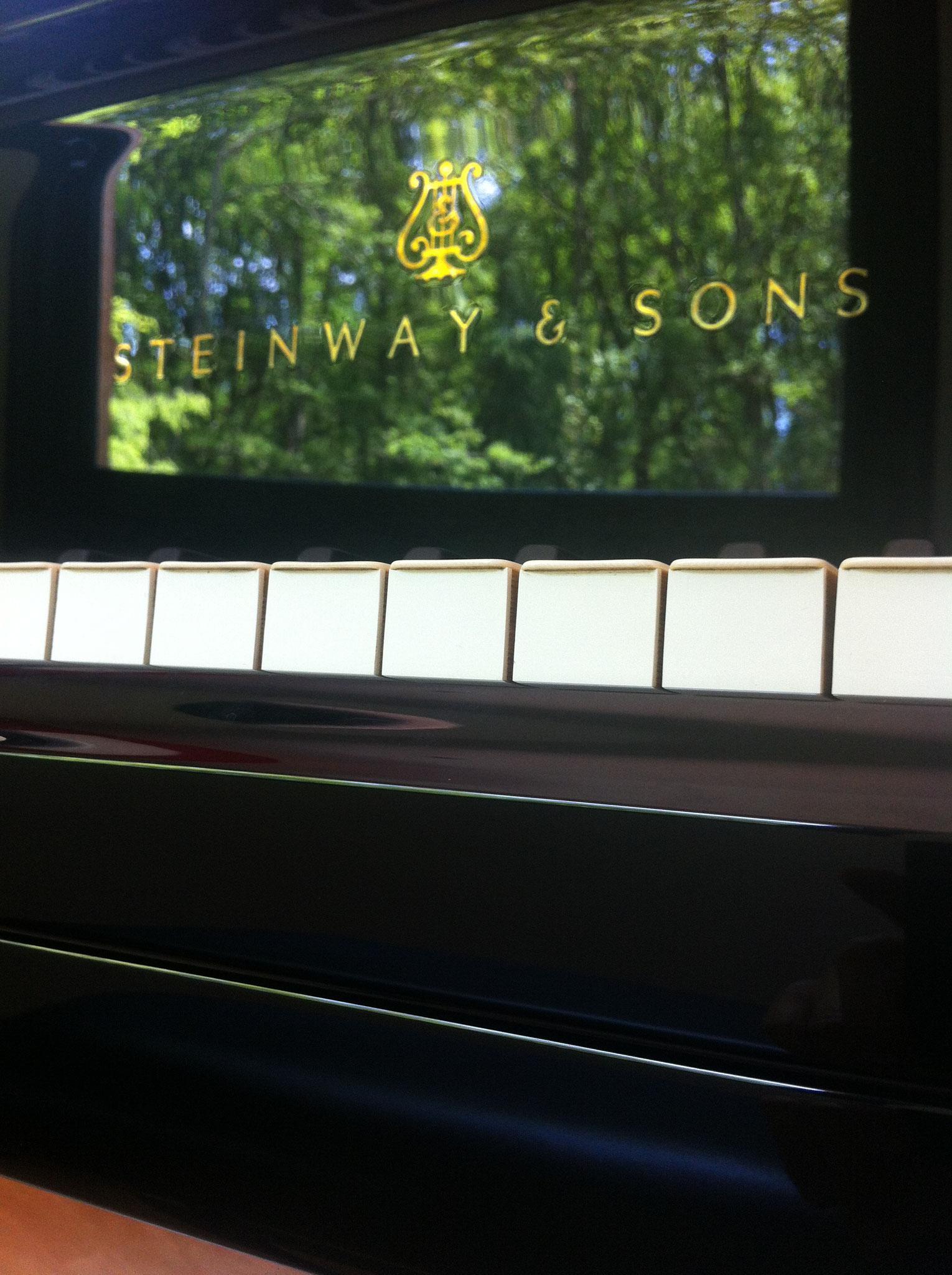 Reflets de la forêt sur le piano