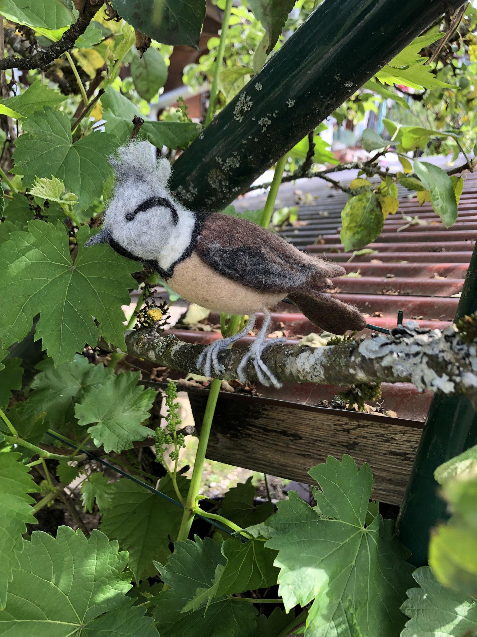Vogel Haubenmeise 8