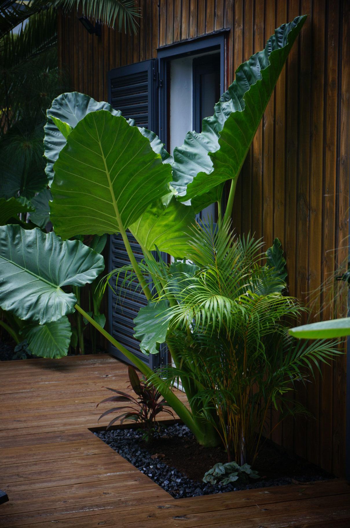 Jardinière tropicale © Rc-Paysage