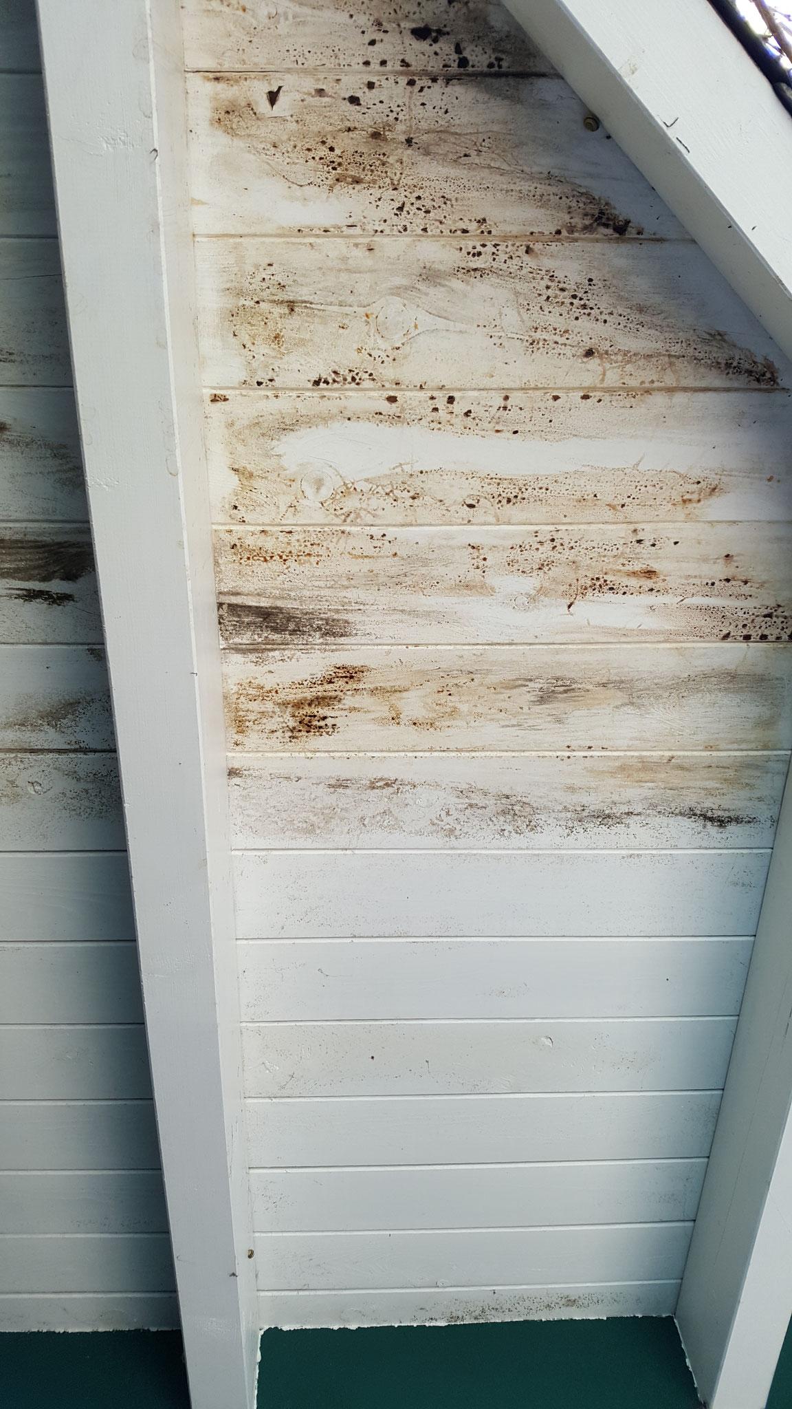 Der Vordachbereich war mit Feuchteschäden versehen und es konnte sich ein Pilz bilden. Die Vordachverschalung wurde abgebrochen und neu aufgebaut.