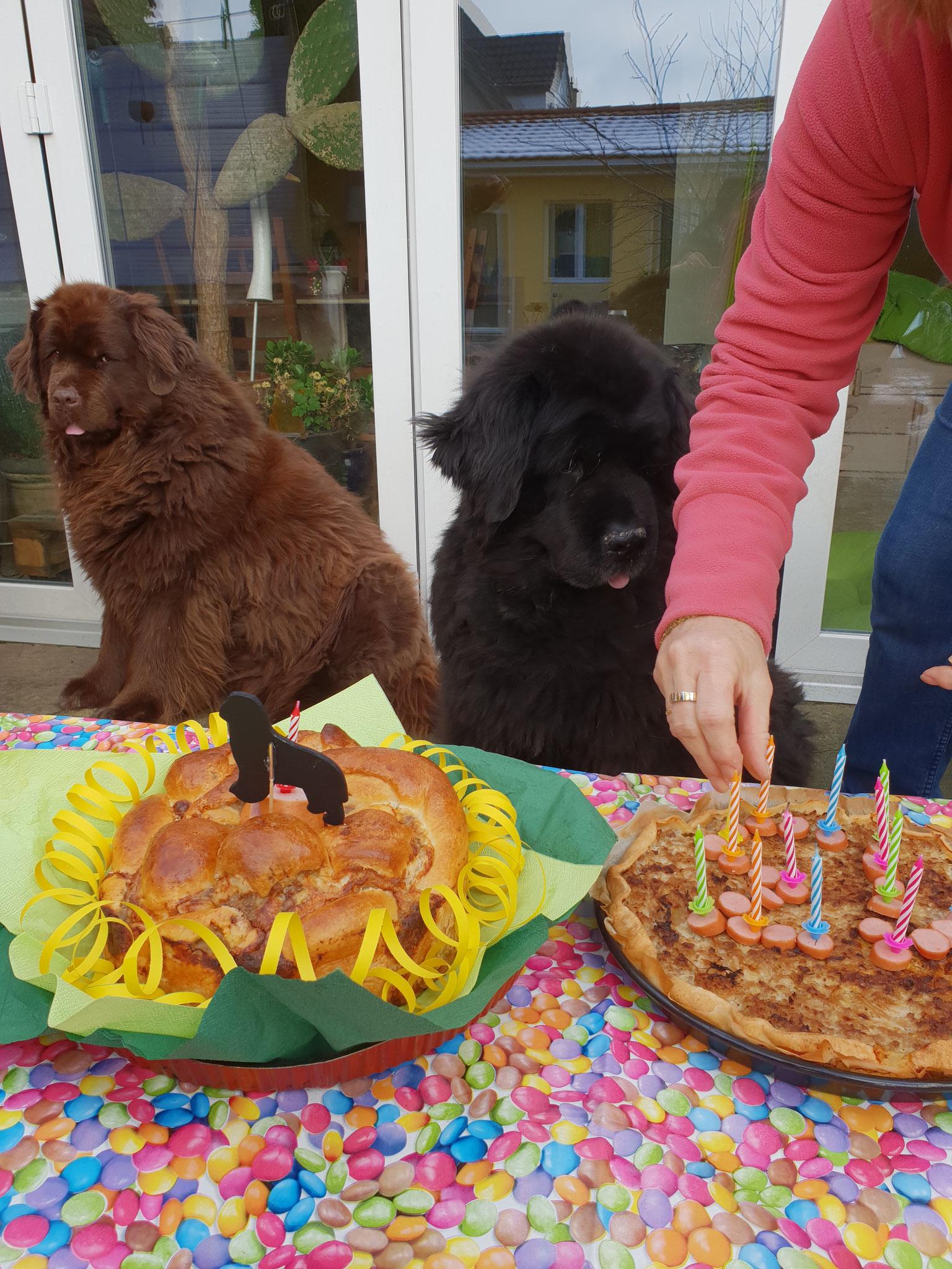 Lesley und Bonaly schauen genau wie der Kuchen geteilt wird