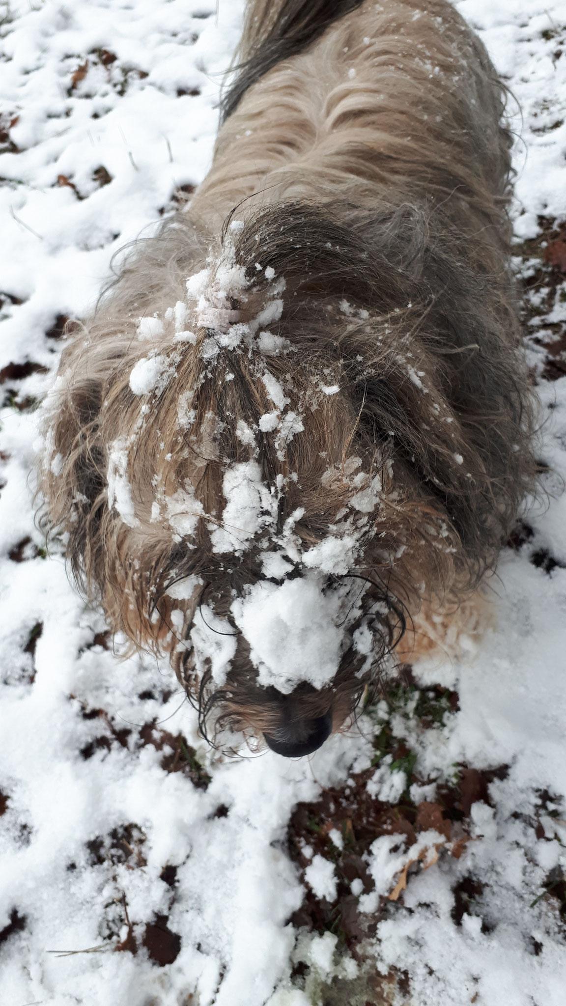 Gismo - der Schneetaucher
