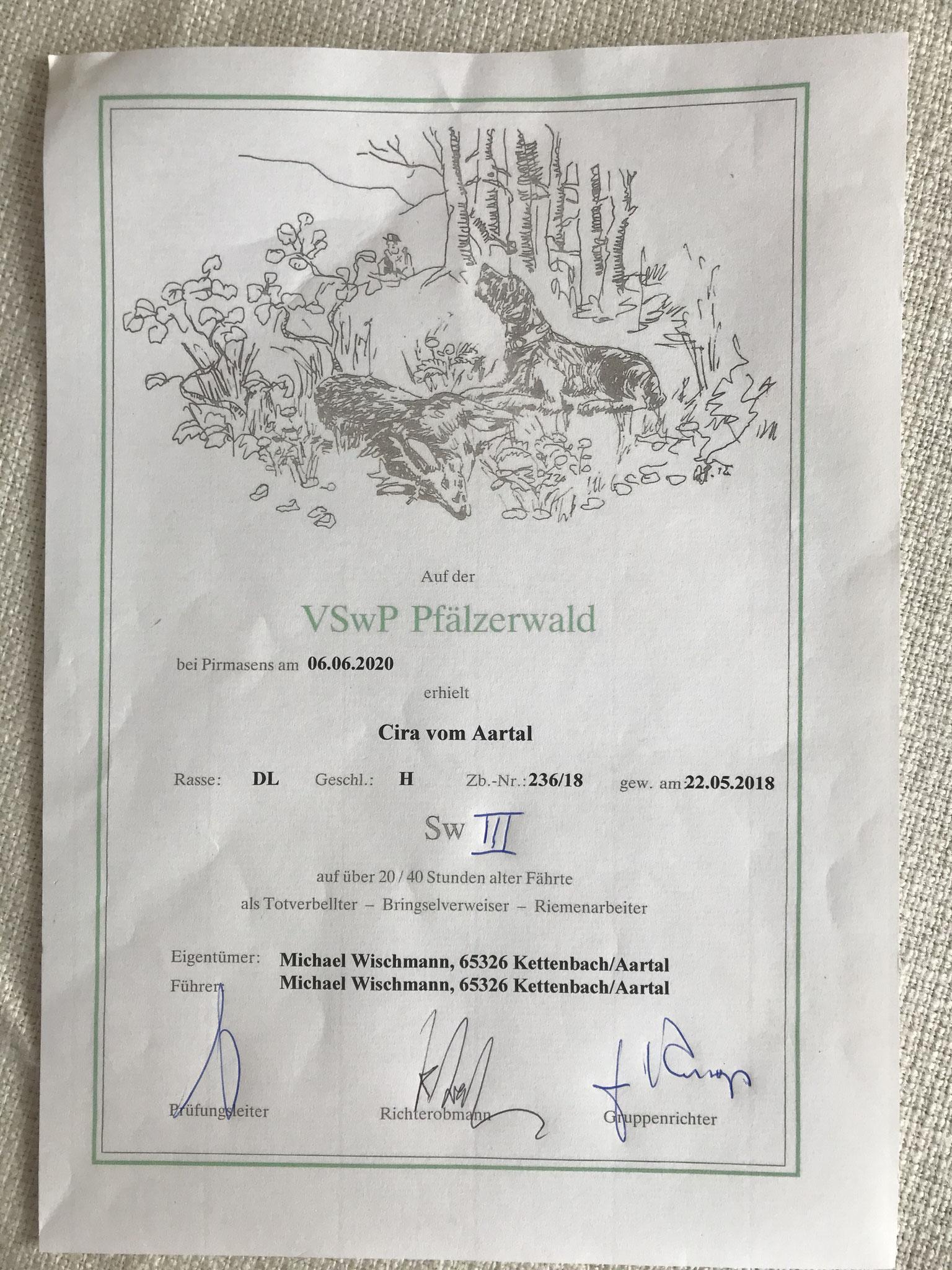 Suchensieger 65. Pfälzerwald