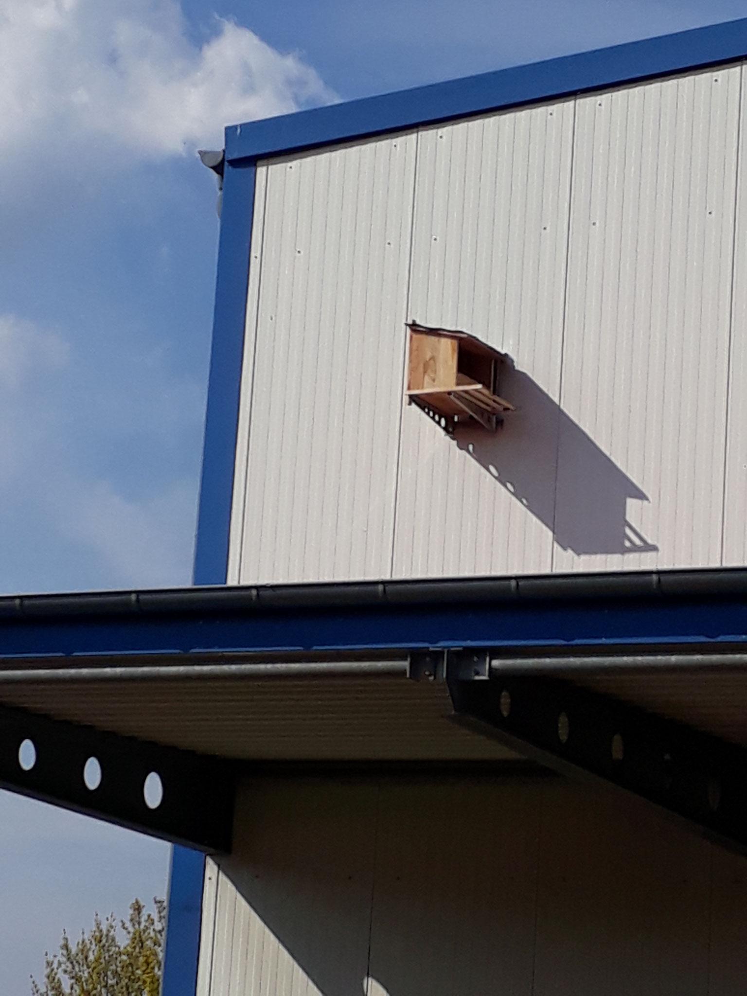 Anbau eines Nistkastens für Turmfalken 2021 (Foto: J. Auras)