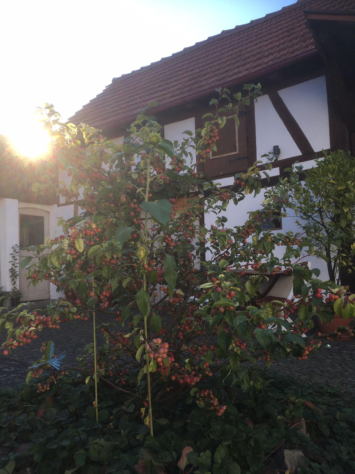 Hof mit Altem Schäferhaus