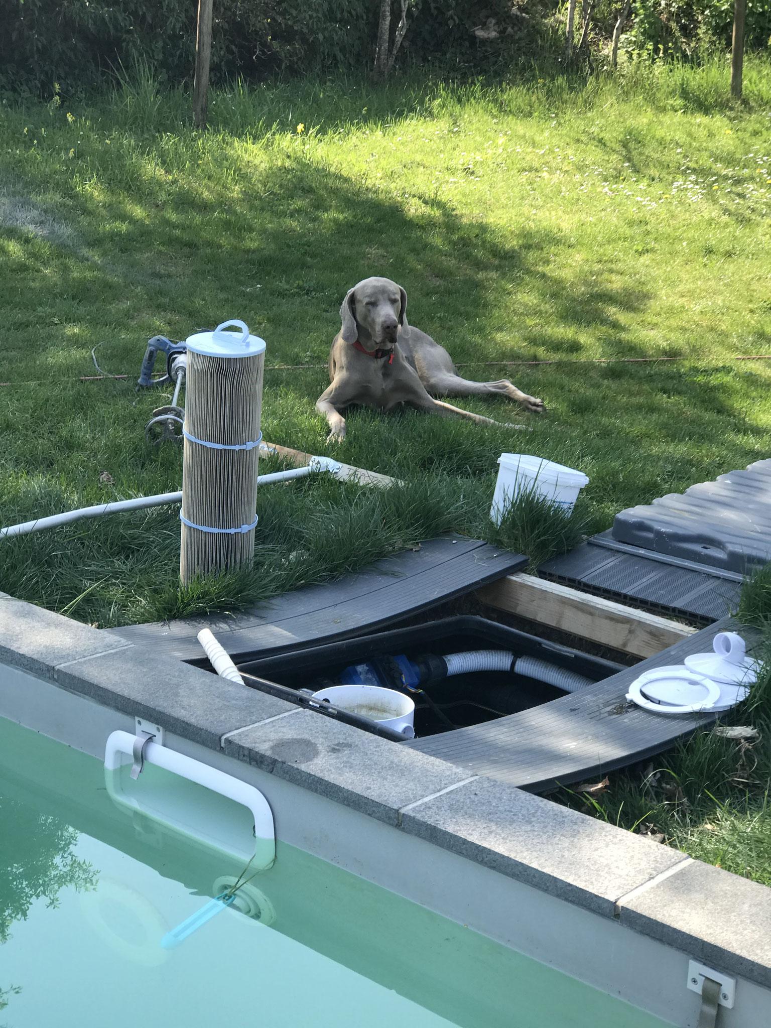 ouverture de la piscine pour la saison
