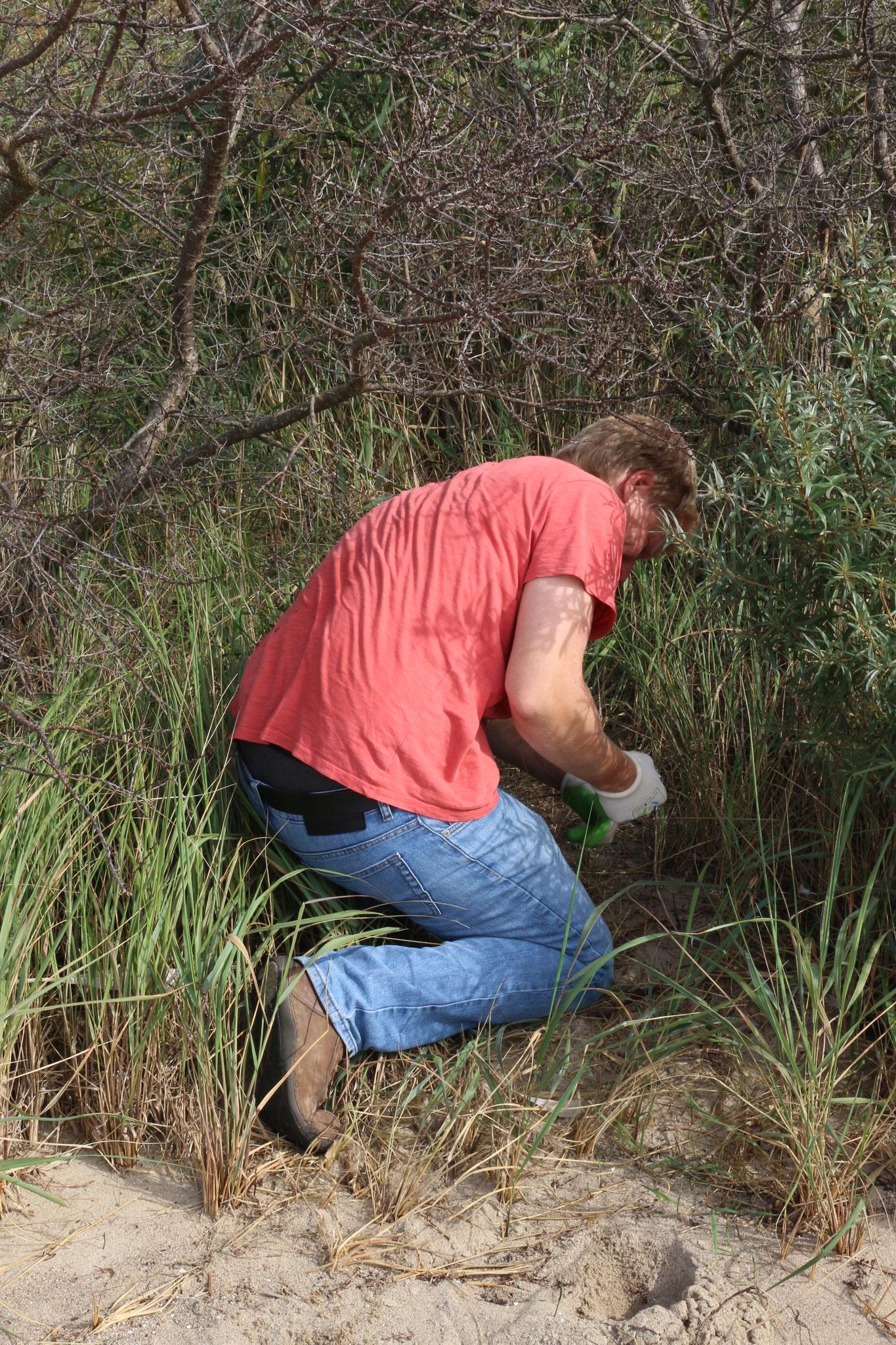 Im Gebüsch fängt sich besonders bei Hochwasser viel Müll.