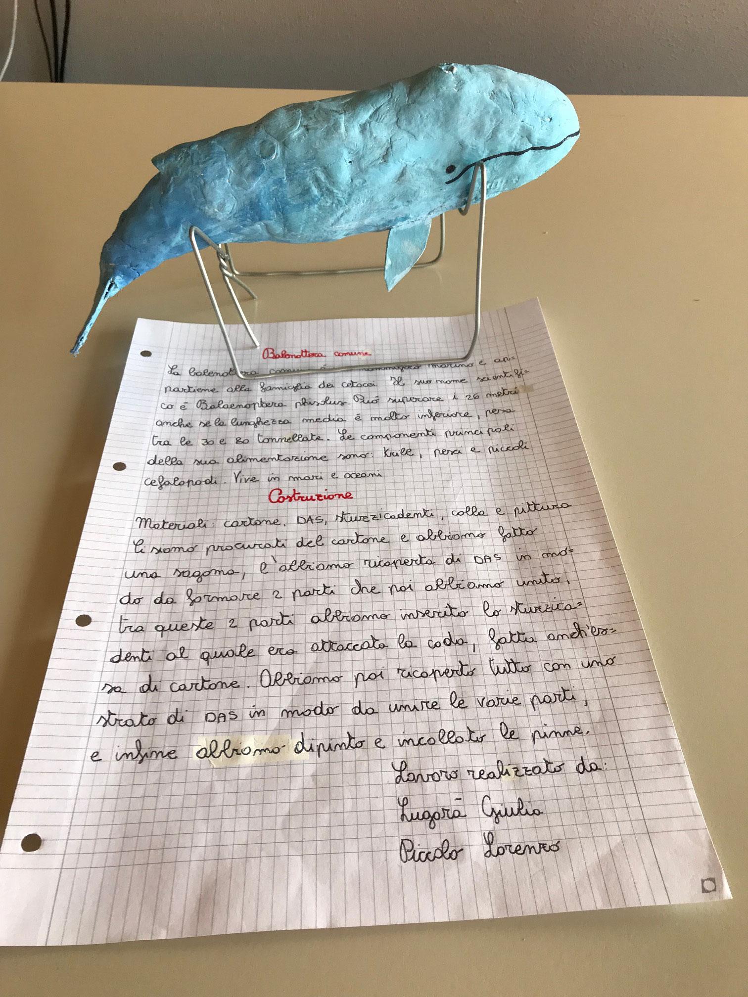 Progetto Linneo: a.s. 2018/2019 Giulia e Lorenzo