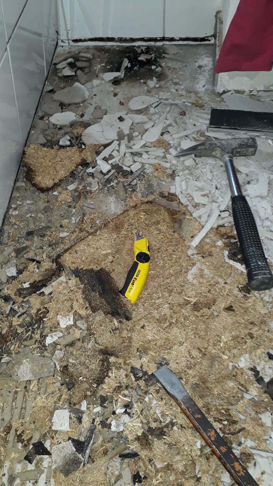 verschimmelten Untergrund entfernen