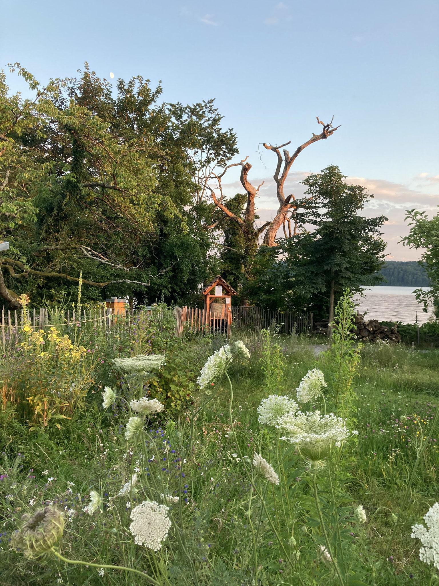 Wilde Blumenwiesen und ein malerischer toter Baum am Seeufer