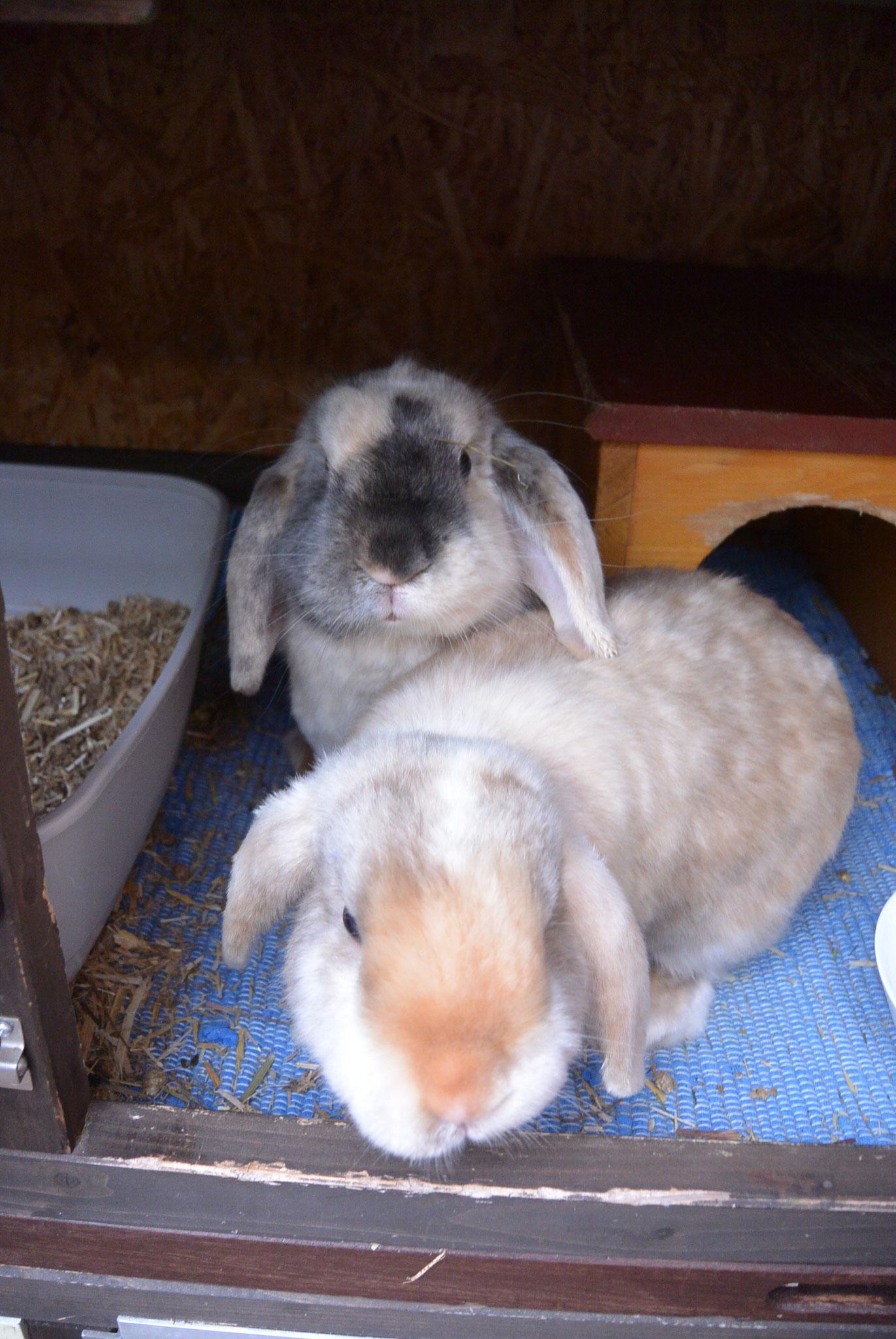 Niki & Sammy