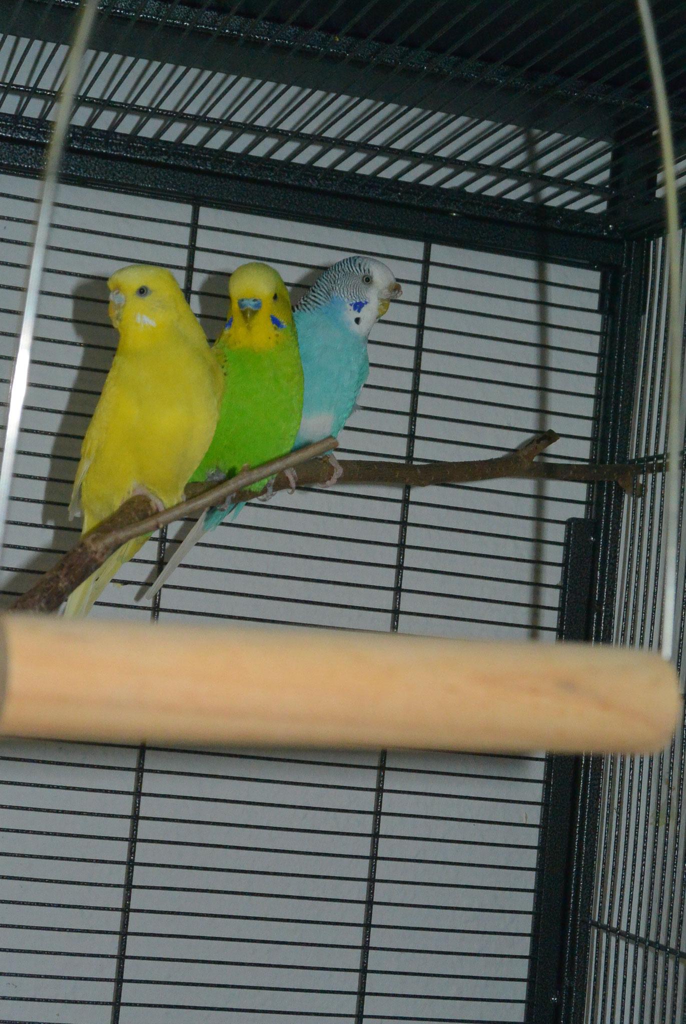 Maja, Lucy, Oscar