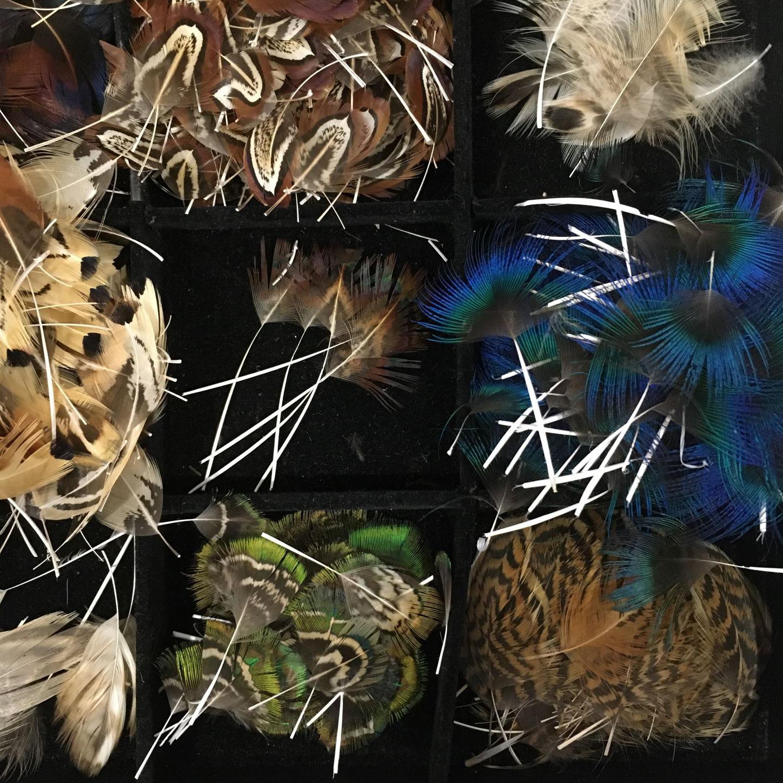 L'étape du tri des plumes par espèces