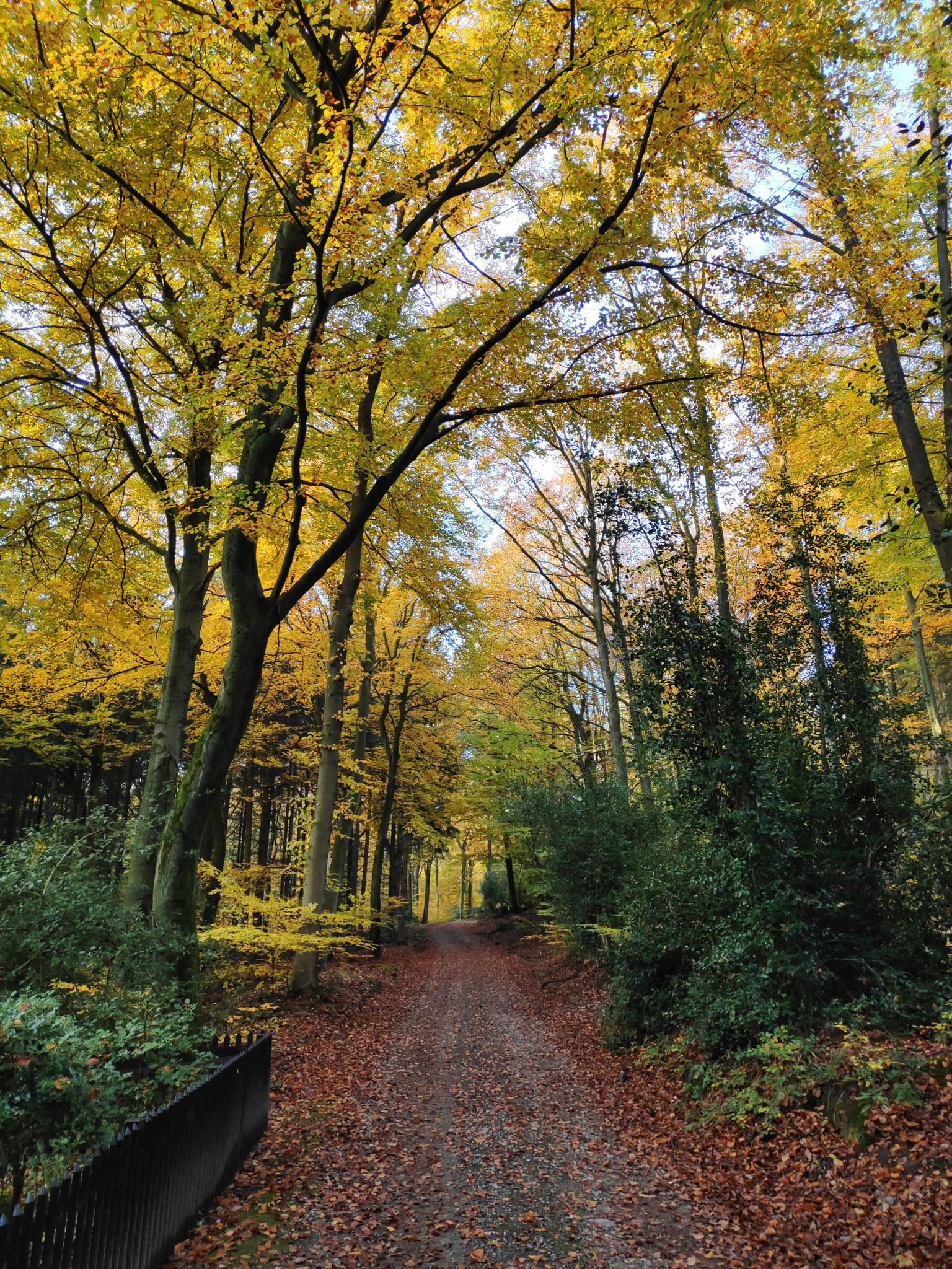 Der Meroder Wald - Ruhe und Erholung garantiert