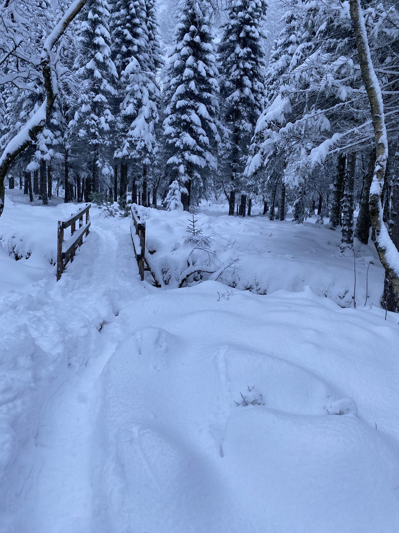 Die Wanderungen im Winter bestritten die Praktikanten bei teilweise hüfthohem Schnee