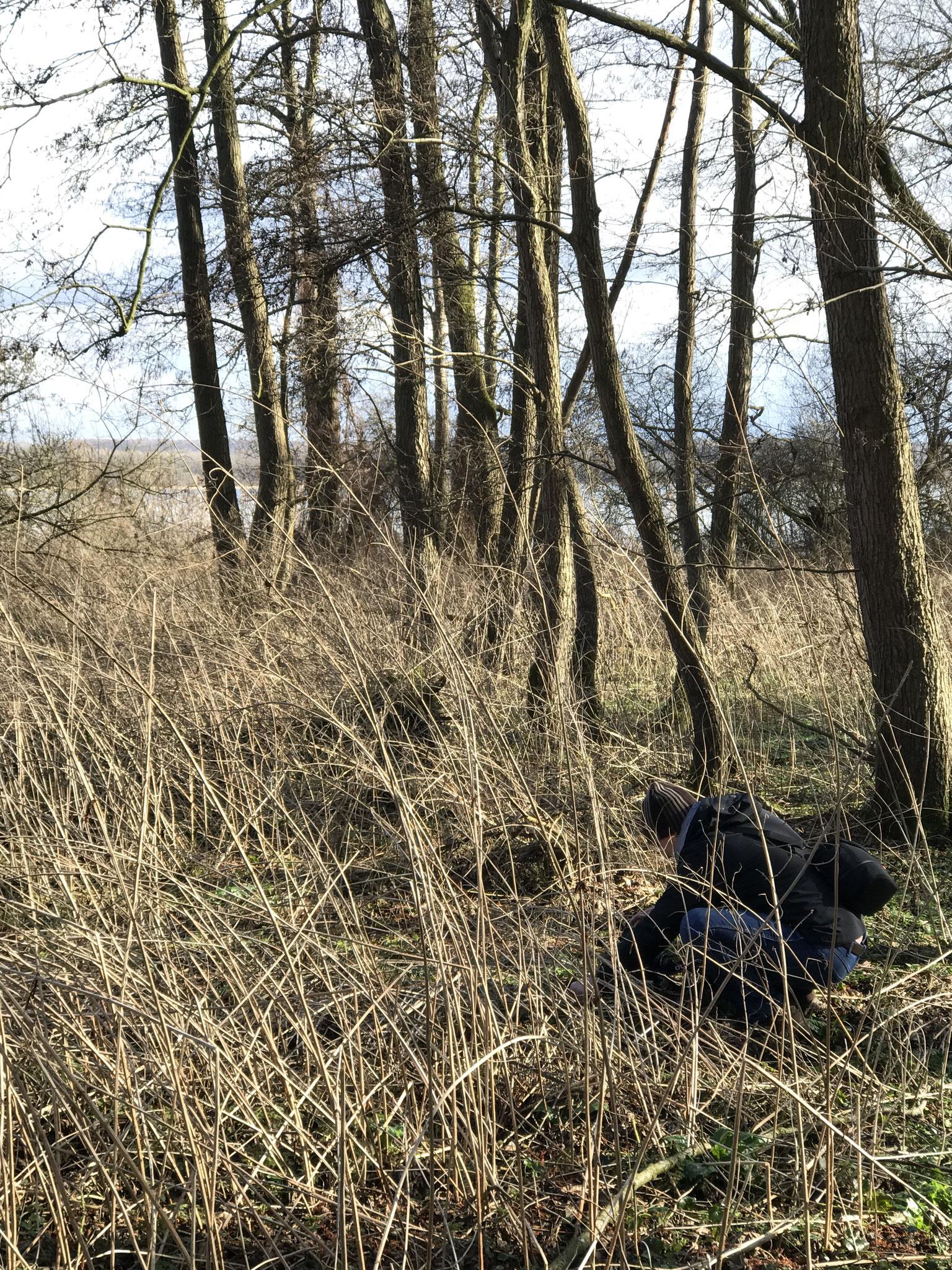 Biotop, Bodenfeuchtes Ufer mit Salix und Alnus