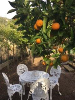 table et chaise sous l'oranger dans le jardin - La maison de Ninette -