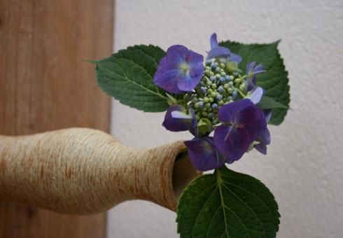 紫陽花 / 横掻き落とし花入れ