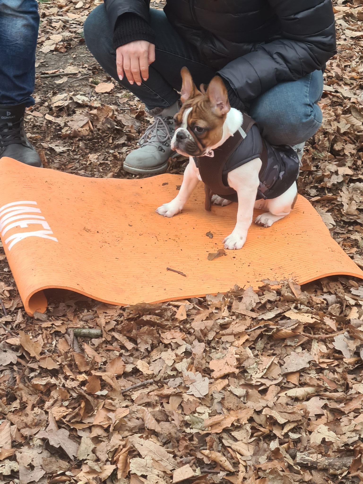 Kleiner Hund beim Hundetraining im Hamburger Stadtpark auf einer Matte
