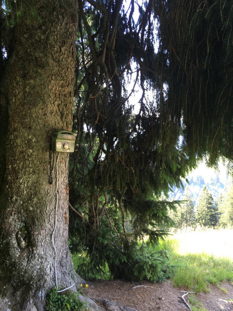 Ein Baumtelefon? Findet selbst heraus wie es funktioniert :-)