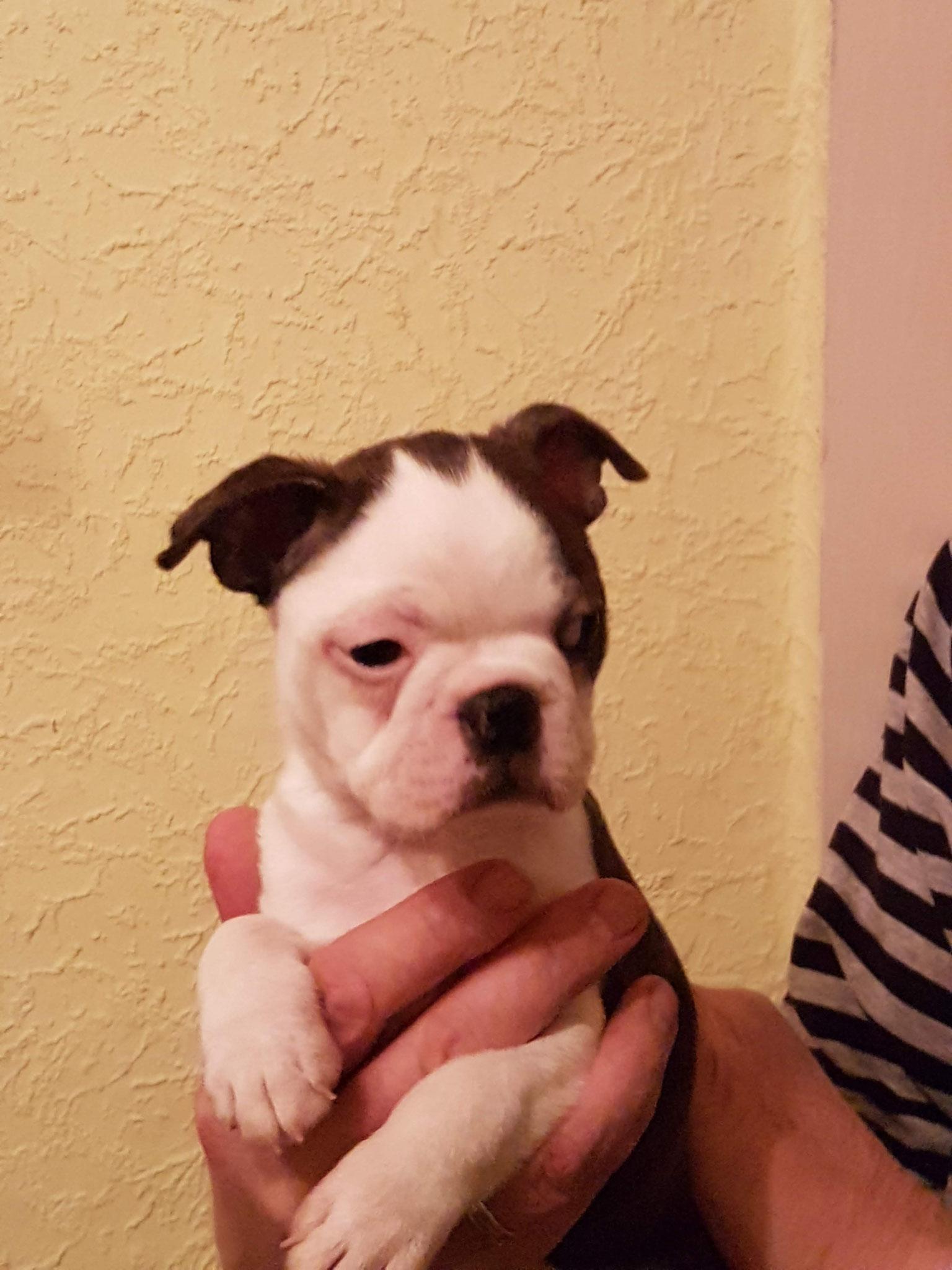 6,5 Wochen alt