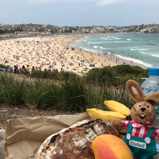 Picnic on legandary Bondi Beach