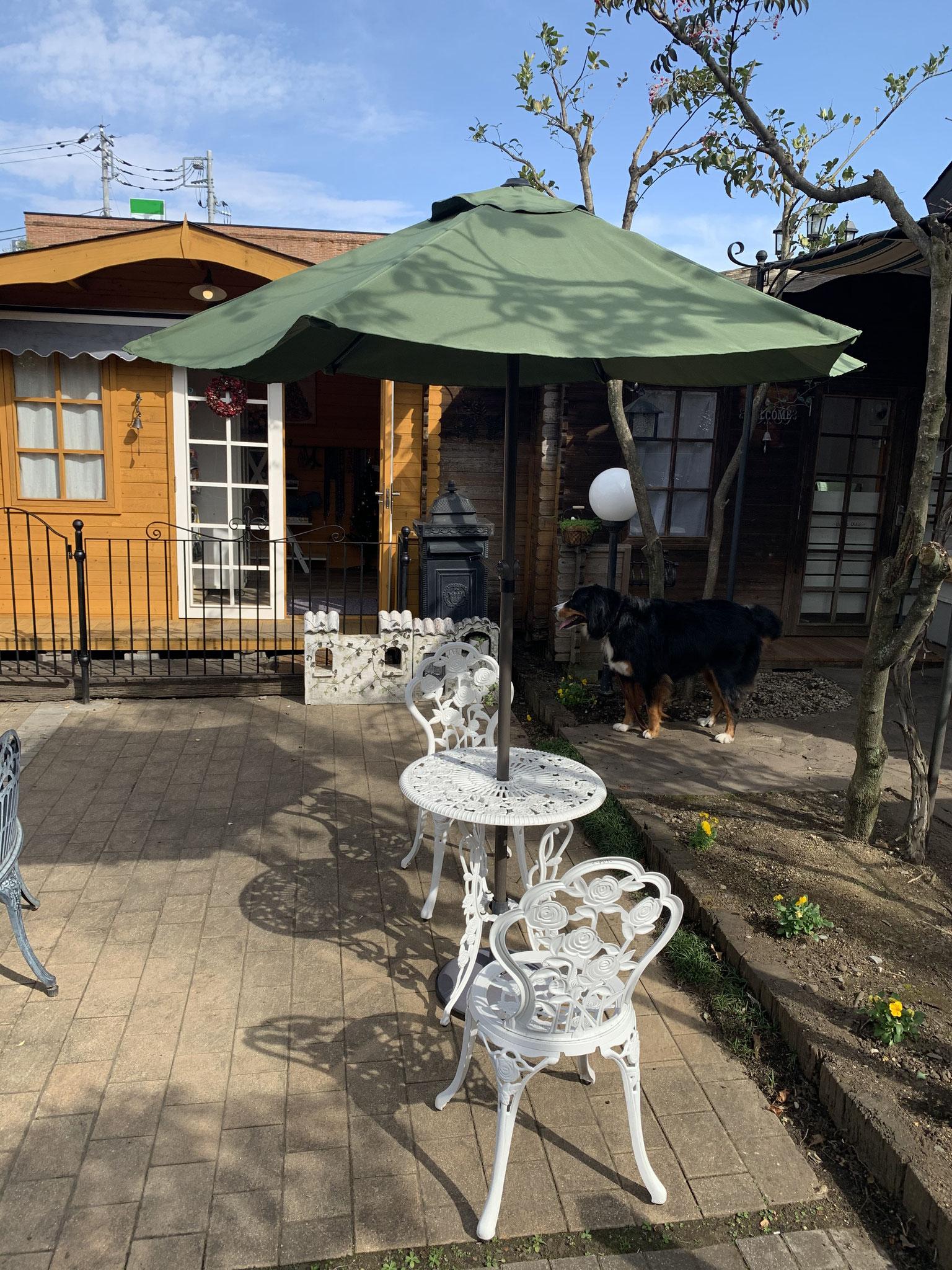 中庭でもご飲食が可能 お天気の良い日にいかがですか