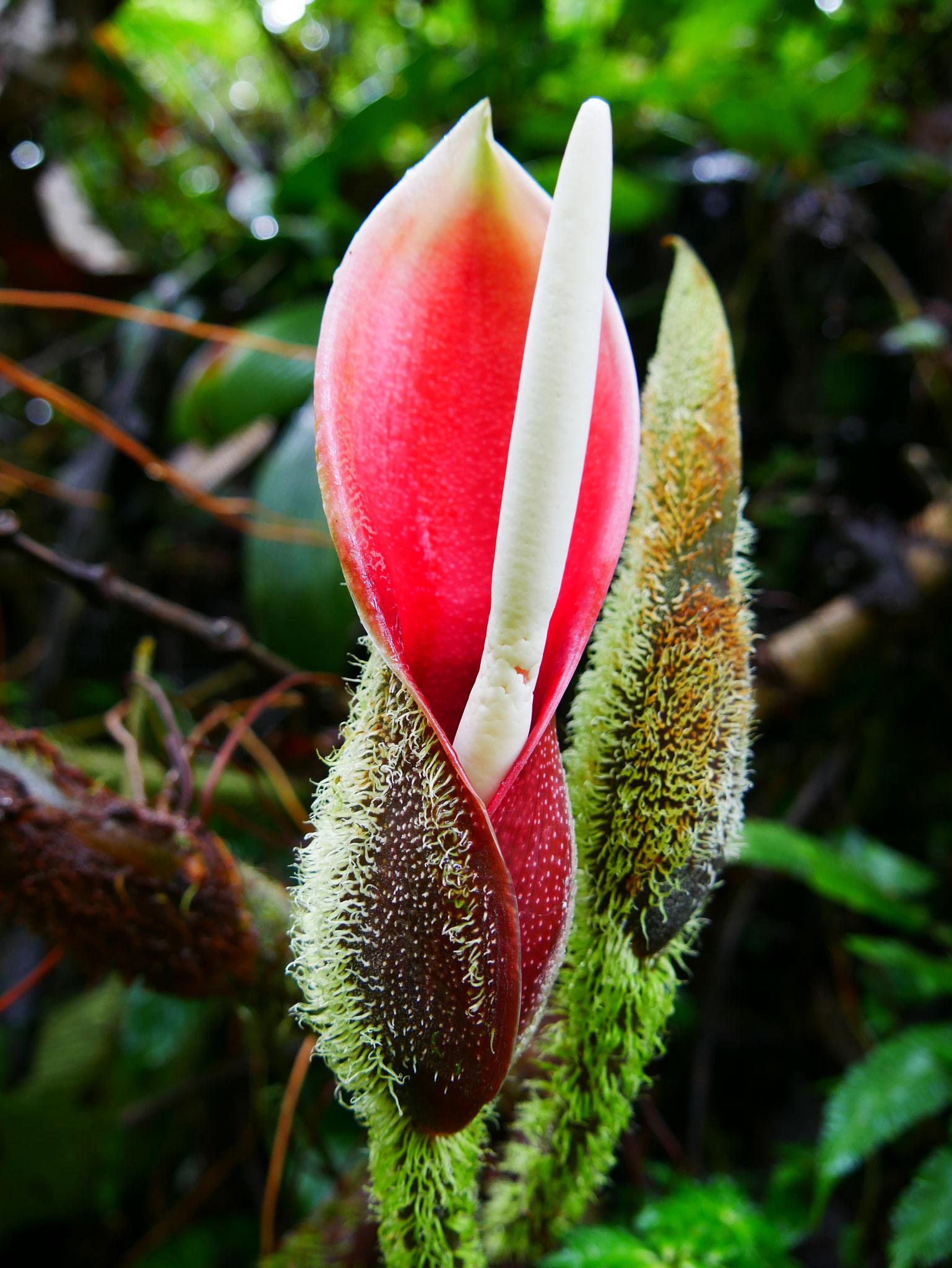 Pflanzenvielfalt im Nebelwald