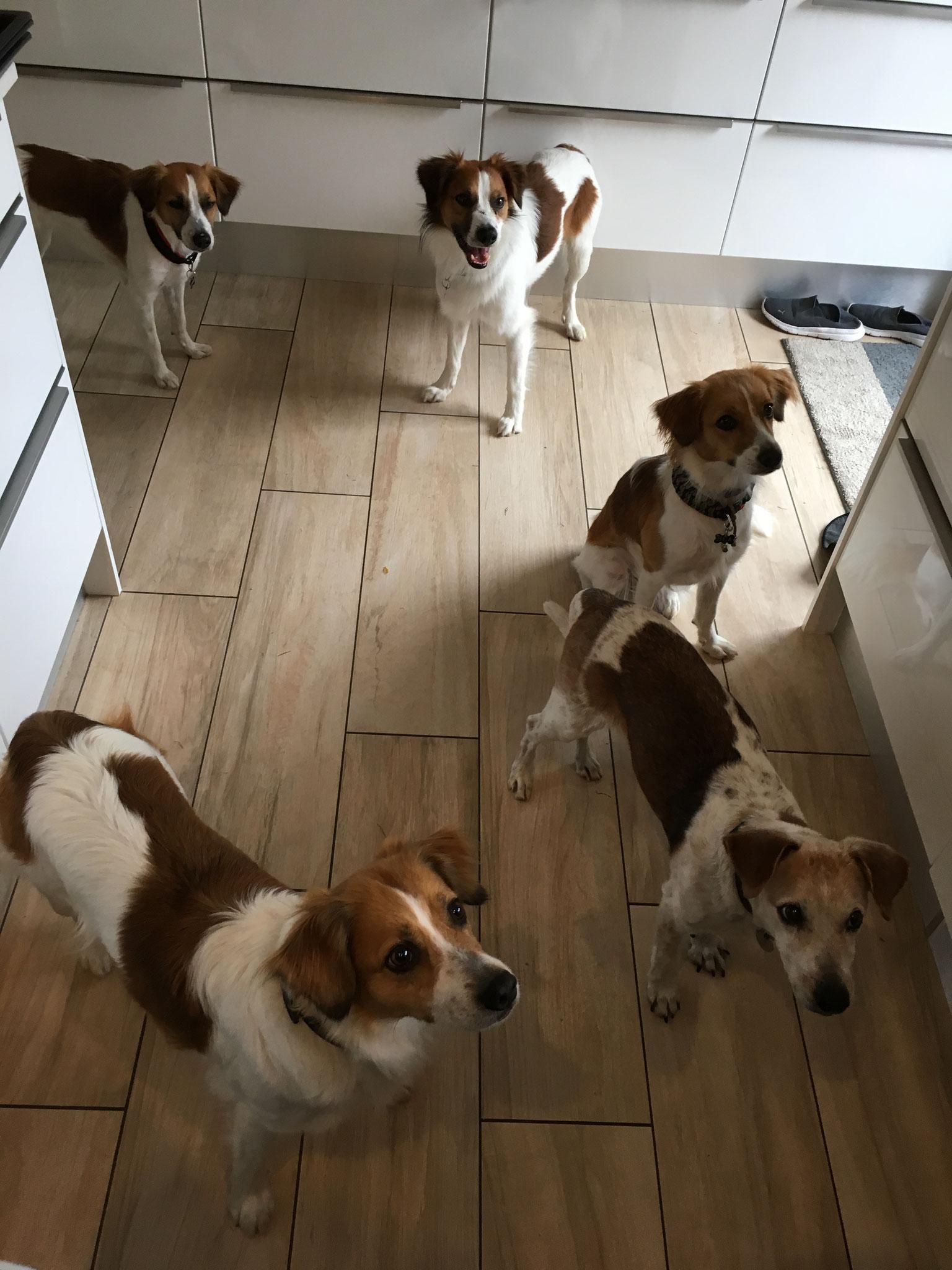 5 Kromis in der Küche