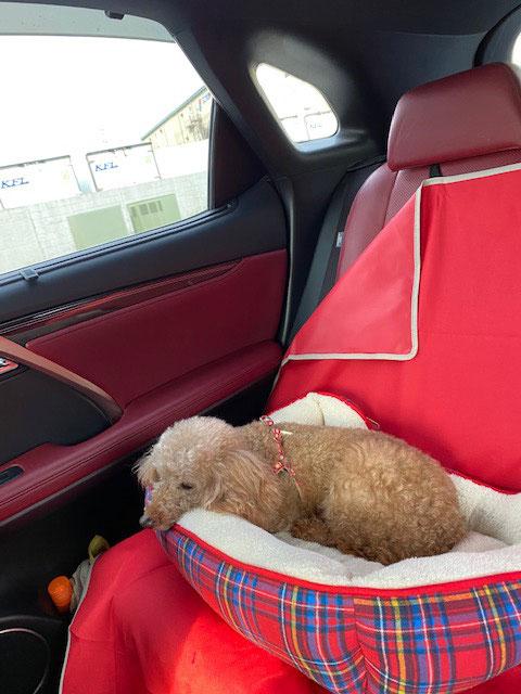 4月15日、保護犬カフェから車中