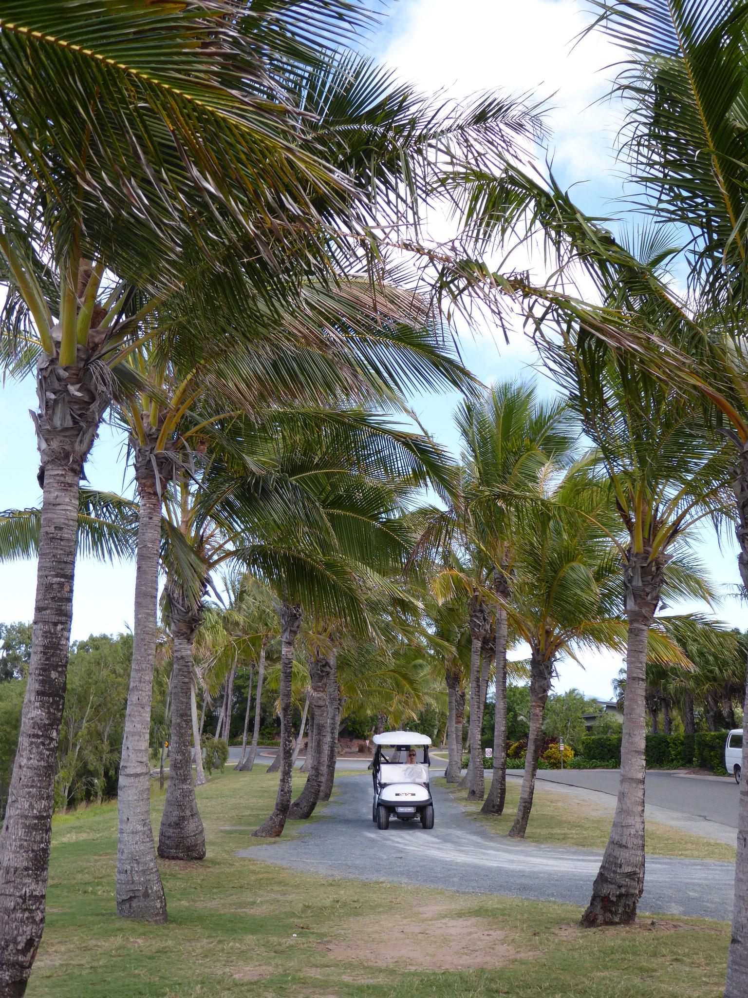 Hamilton Island - golf buggy