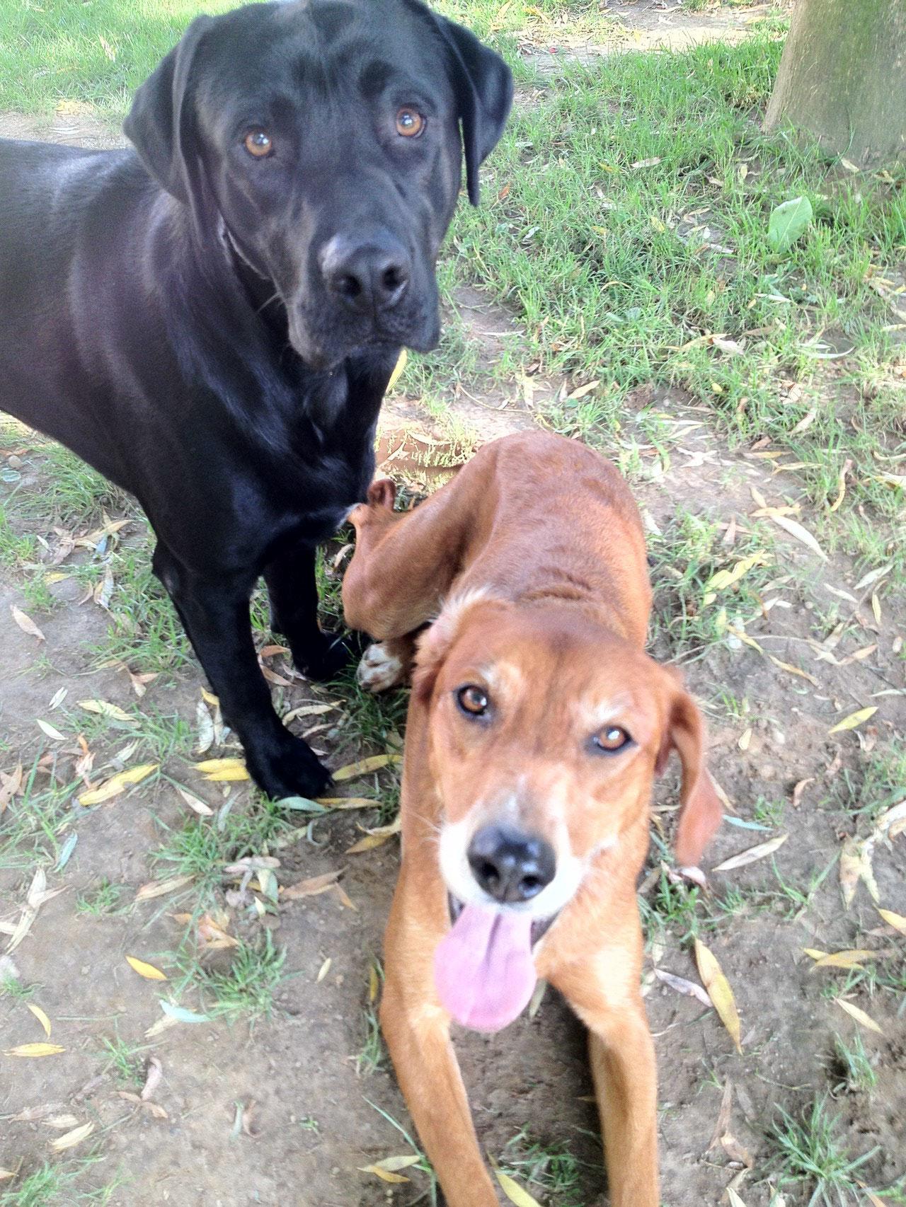 Lucky und Lotte