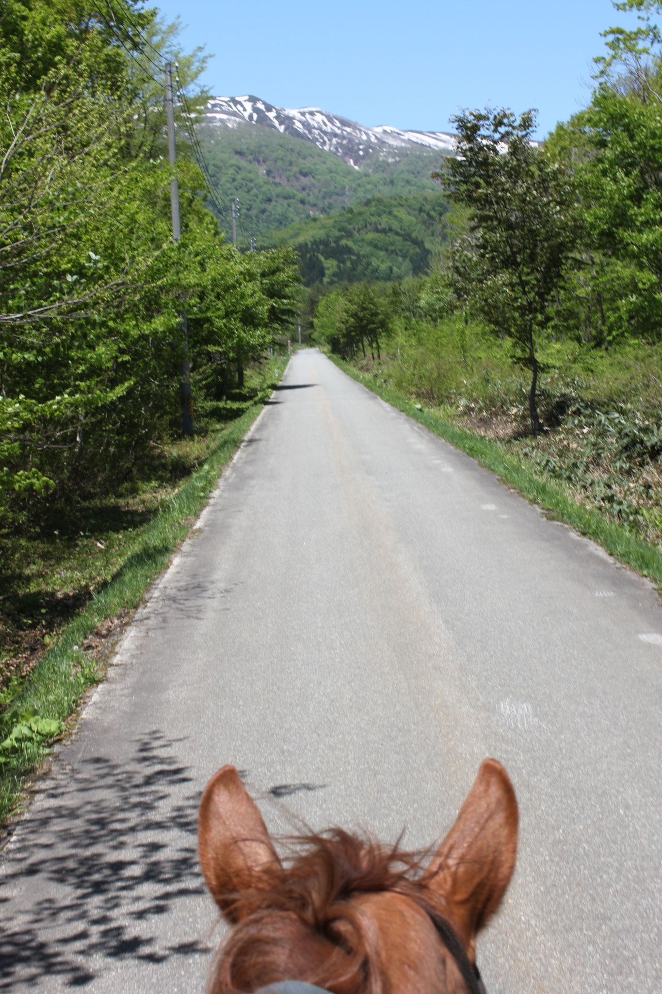 夏:残雪の山並みをみながら乗馬